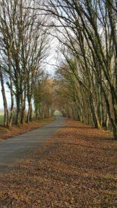 Route à Aubinges