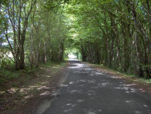 Route boisée à Aubinges