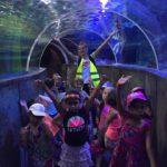 Menetou-Les maternelles en immersion avec la faune aquatique de Touraine